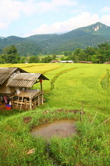Terraced rice fields and house view, Thailand