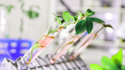 Green plant in genetics laboratory