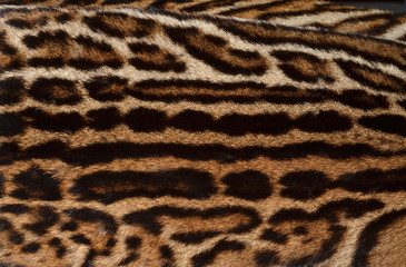 ocelot fur pattern