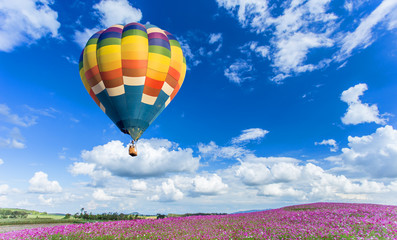 Colorful hot air balloon over pink flower fields