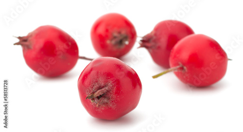 hawthorn isolated on white background