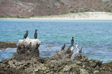 cormorants while resting on rocks