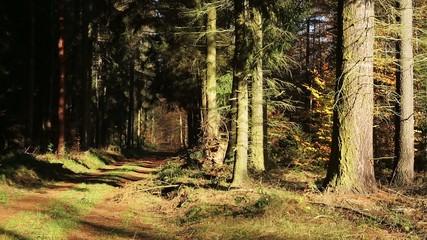 Spazierweg im Wald