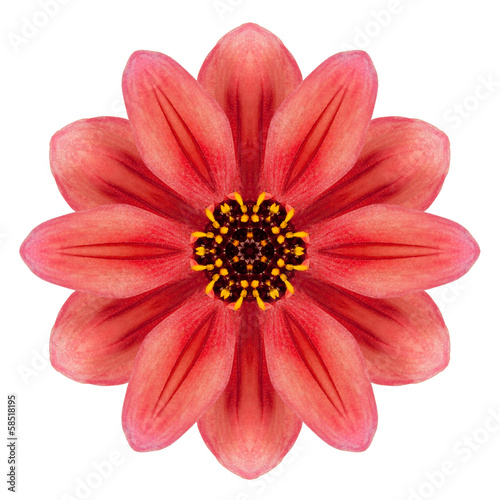 Red Dahlia Mandala Flower Kaleidoscopic Isolated on White