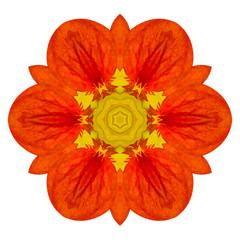 Orange Mandala Flower Kaleidoscopic Isolated on White