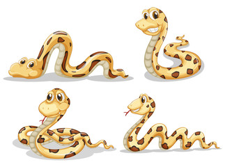Four scary snakes