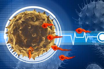 human egg insemination