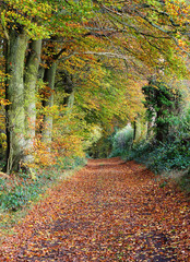 Late Autumn in an English Wood