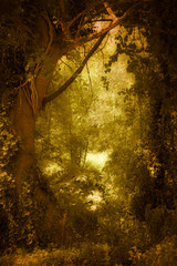 Woods with magical golden light