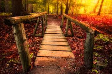 Footbridge path through woods in magical light © littleny