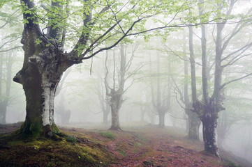 forest with fog and footpath