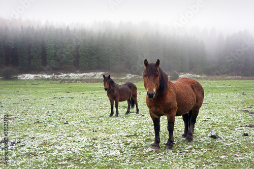 winter landscape with two horses looking