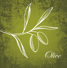 Olive oil.Vector decorative olive branch.