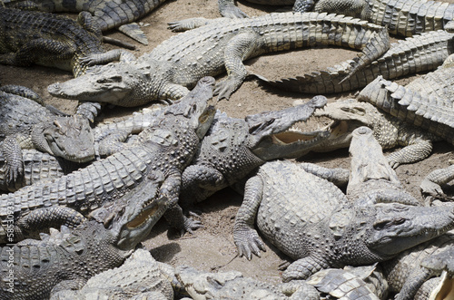 Crocodile Group