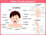 Parts of body - spanish language