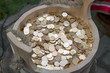 Russian coins in a wooden bucket