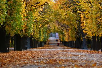 Herbst Schönbrunn
