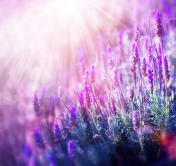 Lavender © Subbotina Anna