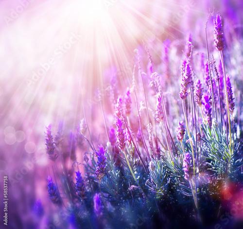 Lavender - 58537758