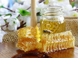 honey bee on a honeycomb (natural product)