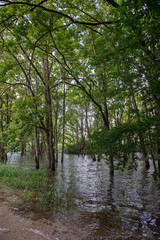 Flooding with trees in water