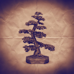 bonsai tree paper backdrop