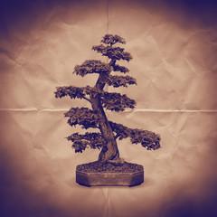 bonsai tree paper backdrop