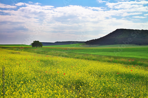Beautiful mountain landscape with field, flowers and cloudy sky