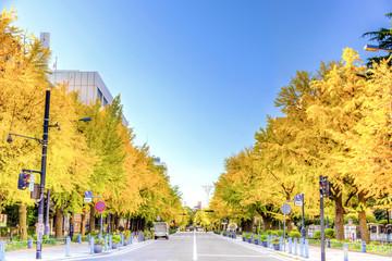 Ginkgo trees of Minato Mirai 21 area in Yokohama, Japan