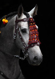 Wonderful Andalusian stallion in horse show Moscow