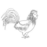A monochrome sketch of a rooster