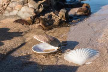 scallop shells on beach at low tide