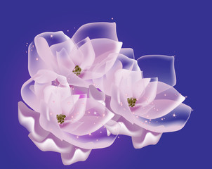 three pink magnolia flowers on blue