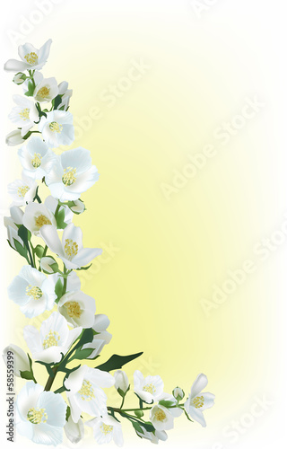 jasmine flowers corner illustration