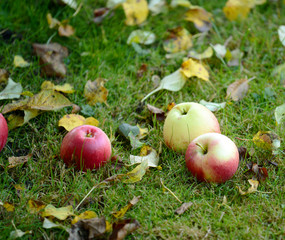 Fresh apples on grass