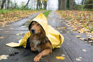 Mischlingshund im Ostfriesennerz