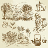 tea plantations - hand drawn set