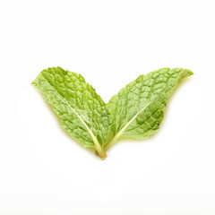 row mint leaves isolated on white background