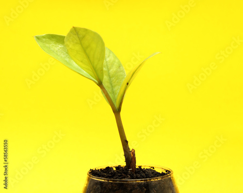 small tree in cup close-up isolated
