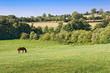 Paysage de Normandie, Calvados, France