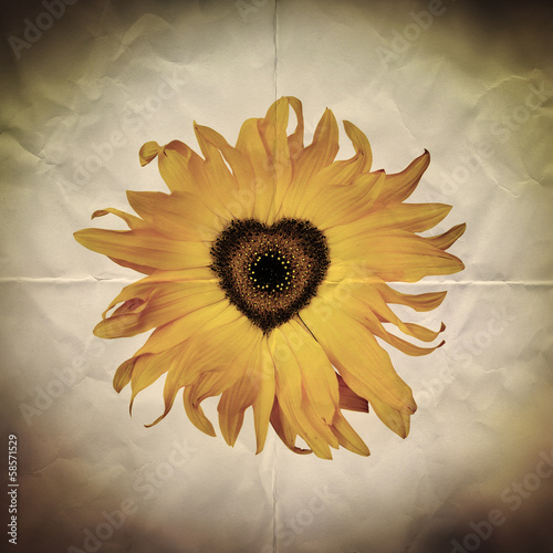 sunflower heart paper backdrop