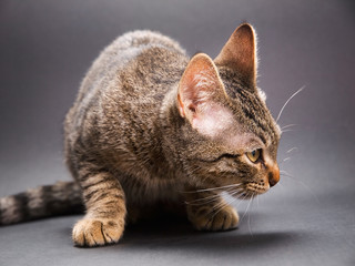 Cat crouched and looking aside