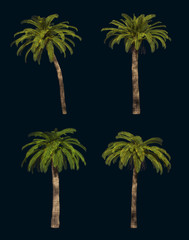 Four Palm Trees 3d CG