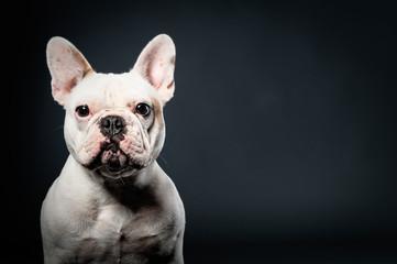 bulldogge 13