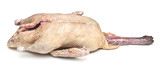 Raw duck isolated on white background