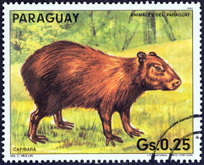 Capybara (Hydrochoerus hydrochaeris) (Paraguay 1985)