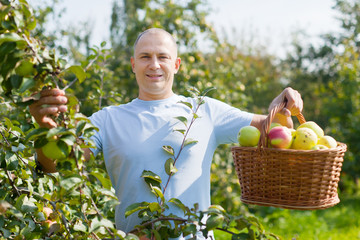 man with apple harvest