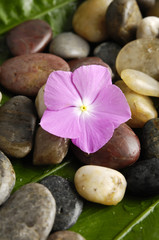 Pile of stones and pink flower on a leaf