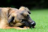 Hund mit Knochen - 58596752
