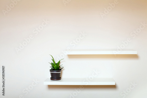 two shelves on the white wall and green plant in pot